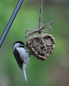 Gâteau de graines pour nourrir les oiseaux l'hiver