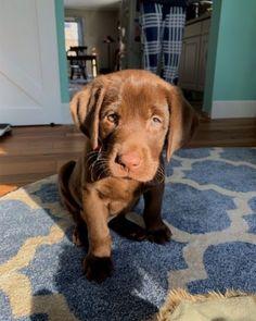 Dog And Puppies Memes .Dog And Puppies Memes Super Cute Puppies, Little Puppies, Cute Dogs And Puppies, I Love Dogs, Doggies, Cute Dogs Breeds, Cutest Dogs, Babies With Dogs, Puppies Puppies