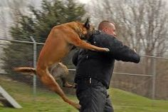 Training dogs http://partykrakow.co.uk/stag-weekends-krakow/pranks/rabid-dog-chase/