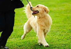 Dog Training in Houston Texas. Off Leash K9 Training Houston is widely regarded as one of the top dog training businesses in Houston, Texas