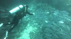 Balicasag JackFish School   Pata Negra Dive Center Bohol, Scuba Diving, Amazing Places, Singapore, The Good Place, Island, Beach, Diving, The Beach