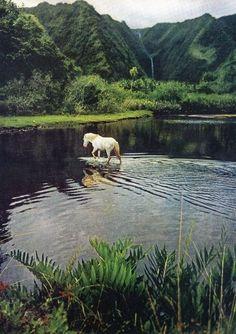 www.pegasebuzz.com | Equestrian photography : South Seas 1955 by Eliot Elisofon.