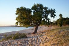 Playa Juan Lacaze, Colonia Montevideo, Tour Guide, Tourism, Country Roads, Sunset, World, Beach, Water, Outdoor