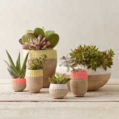 Colorblocked Mini Bowl Planter in Garden Indoor Planters at Terrain