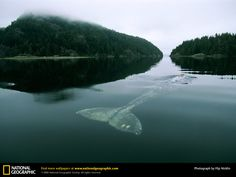 national geographic, wallpaper - Google Search