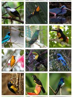 Birding at the Lodge at pico bonito...in Honduras