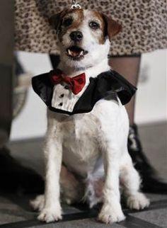Doggie star Uggie to release autobiography  (Matt Sayles / AP)