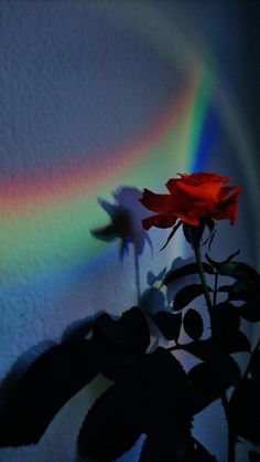 Rainbow Wallpaper, Rose Wallpaper, Scenery Wallpaper, Cute Wallpaper Backgrounds, Pretty Wallpapers, Iphone Wallpapers, Wallpaper Lockscreen, Screen Wallpaper, Cute Wallpapers For Mobile