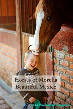 Horses of #Morelia - Beautiful #Mexico