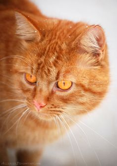 """In my world, the grass is green, the sky is blue and all cats are orange."" --Jim Davis (Creator of ""Garfield"")"