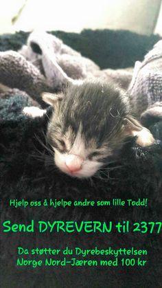 """Send kodeordet """"DYREVERN"""" til 2377. Da støtter du Dyrebeskyttelsen Norge Nord-Jæren med 100 kr. Pengene går uavkortet til dyrene. Dyr som lille Todd er avhengig av dette for å kunne vokse opp. Hjelp oss å hjelpe!"""