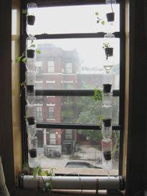 Urban Window Farms
