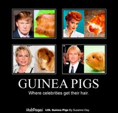 Well maybe not literally - but they're great inspiration for famous hair styles.