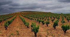#wine #larioja #vino #tierradevino #bodegasmurilloviteri #rioja