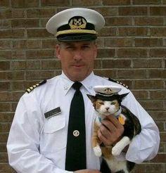 Captain Kitty. .