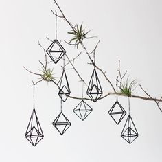himili with air plants...option to attach a visually pleasing branch to the wall, and hang from there