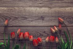 Background with red tulips on grunge wooden boards. Top view