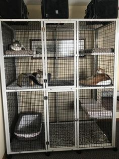 Cat Cages – Page 2 – CDECages Cat Cages Indoor, Outdoor Cat Cage, Outdoor Cats, Indoor Cat Enclosures, Outdoor Cat Enclosure, Dog Cages, Pet Cage, Animal Shelter, Animal Rescue