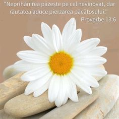 Wisdom, Bible