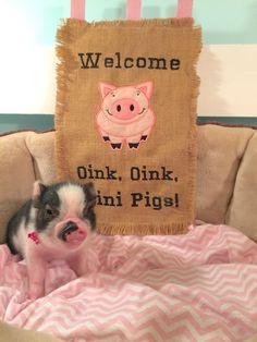 www.oinkoinkminipigs.com