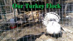 Turkey Update