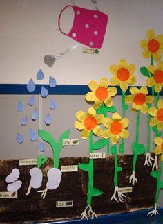Planting and growing seeds classroom display photo. Wat een leuk idee voor in de klas!