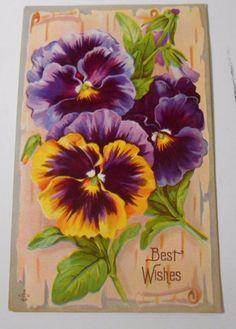 Vintage Postcard Greeting Best Wishes Divided Back Unused Unposted Pansies  5066 #BestWishes
