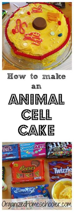 An animal cell cake project is an edible way to teach organelles. Use candy to represent the different organelles.