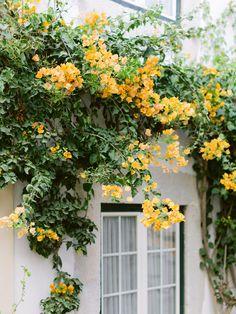 Portuguese inspiration Lisbon Portugal, Algarve, Engagements, Destination Wedding Photographer, Couple Photography, Portuguese, Floral Wreath, Plants, Inspiration