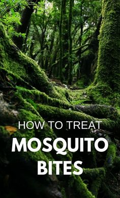 Hiking and camping: How to treat mosquito bites on summer vacation, even more for kids outdoors in backyard! Whether it's camping, hiking, trail running, in your yard, mosquito repellent may not work. Tips on how to treat mosquito bites, there are DIY homemade natural remedies with plants, herbs, and essential oils for skin to get relief from big swollen bites and stop itching, scars, swelling, and redness. Add remedy to the camping checklist of things to pack for vacation! #hiking #camping