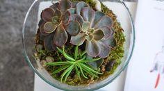 Un terrarium pas cher à faire soi-même