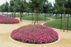 Martha Schwartz Partners - Projects - Parks - Linearpark