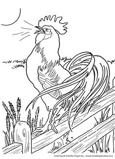 Farm animal chicken coloring page | Morning Roster at the crack of dawn