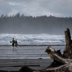 Visit Tofino and Ucluelet During The Pacific Rim Whale Festival
