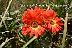 Geluk met jou verjaardag Geluk, Birthday Wishes, Projects To Try, Plants, Image, Plant, Birthday Greetings, Planting, Birthday Favors