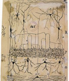Réminiscences: Santiago Ramon y Cajal - Neuroscientifique espagnol - - Botanical Illustration, Illustration Art, Prix Nobel, Neuroscience, Kraft Paper, Ancient Art, String Art, Doctors, Biology