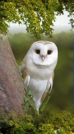 wild and pets comparison essay ideas, petco and petsmart killing for food, and pets boards ie television fanatic app, animals and pets klub srpski telegraf novine. Owl Photos, Owl Pictures, Beautiful Owl, Animals Beautiful, Nature Animals, Animals And Pets, Wild Animals, Owl Bird, Pretty Birds
