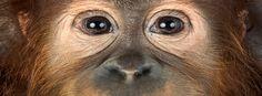 Выращенная в лаборатории ткань сетчатки вернула обезьянам зрение - http://russiatoday.eu/vyrashhennaya-v-laboratorii-tkan-setchatki-vernula-obezyanam-zrenie/          Пигментный ретинит — это генетическое заболевание глаз, которое вызывает повреждение сетчатки. Оно неизлечимо; со временем человек с эт�