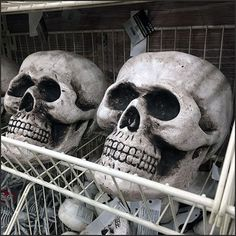 Endless Basket Outfitting for Halloween Skulls – Fixtures Close Up