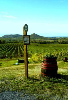 The  Vine Yards of , Badacsony, Hungary