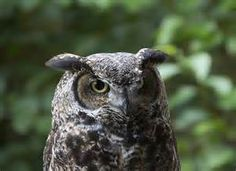 silly owl - Yahoo! Image Search Results