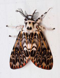 pink moth #moth