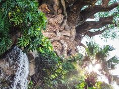 How do you make a Disney World vacation even more magical? Here are the top 20 photo spots in Disney World to do just that! Dslr Photography Tips, Landscape Photography Tips, Photography Tips For Beginners, Photography Lessons, Landscape Photos, Digital Photography, Photography Business, Improve Photography, Photography Tutorials