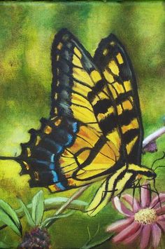 Butterfly+Paintings+On+Canvas | Yessy Home > Amy Windland > Butterflies > Swallowtail Butterfly