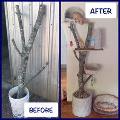DIY cat tree. Recycled from a downed tree branch after the storms an old bike b