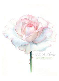White rose of peace. Watercolor painting by Teri Farrell-Gittins at Shootsandblo...