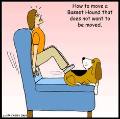 For anyone who have ever owned a Basset Hound! Haha