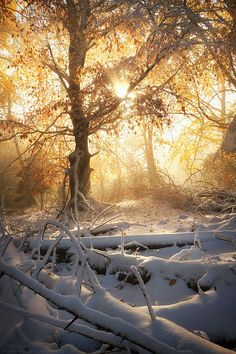 When Winter Meets Fall, Les Bois Noirs, France, by Florent Courty on Winter Szenen, I Love Winter, Winter Time, Winter Christmas, I Love Snow, Snow Scenes, Winter Beauty, Beautiful World, Beautiful Pictures
