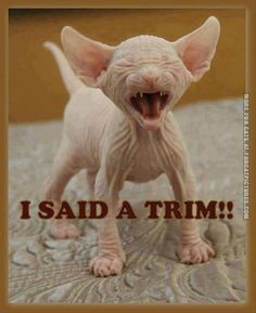"This is exactly what happens when my mom says she will ""trim"" my hair - Tap the link now to see all of our cool cat collections!"