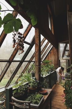 Growing indoors, slanted glass wall acts as a greenhouse to promote growth. Also fills the awkward, small gap in an A-Frame house.